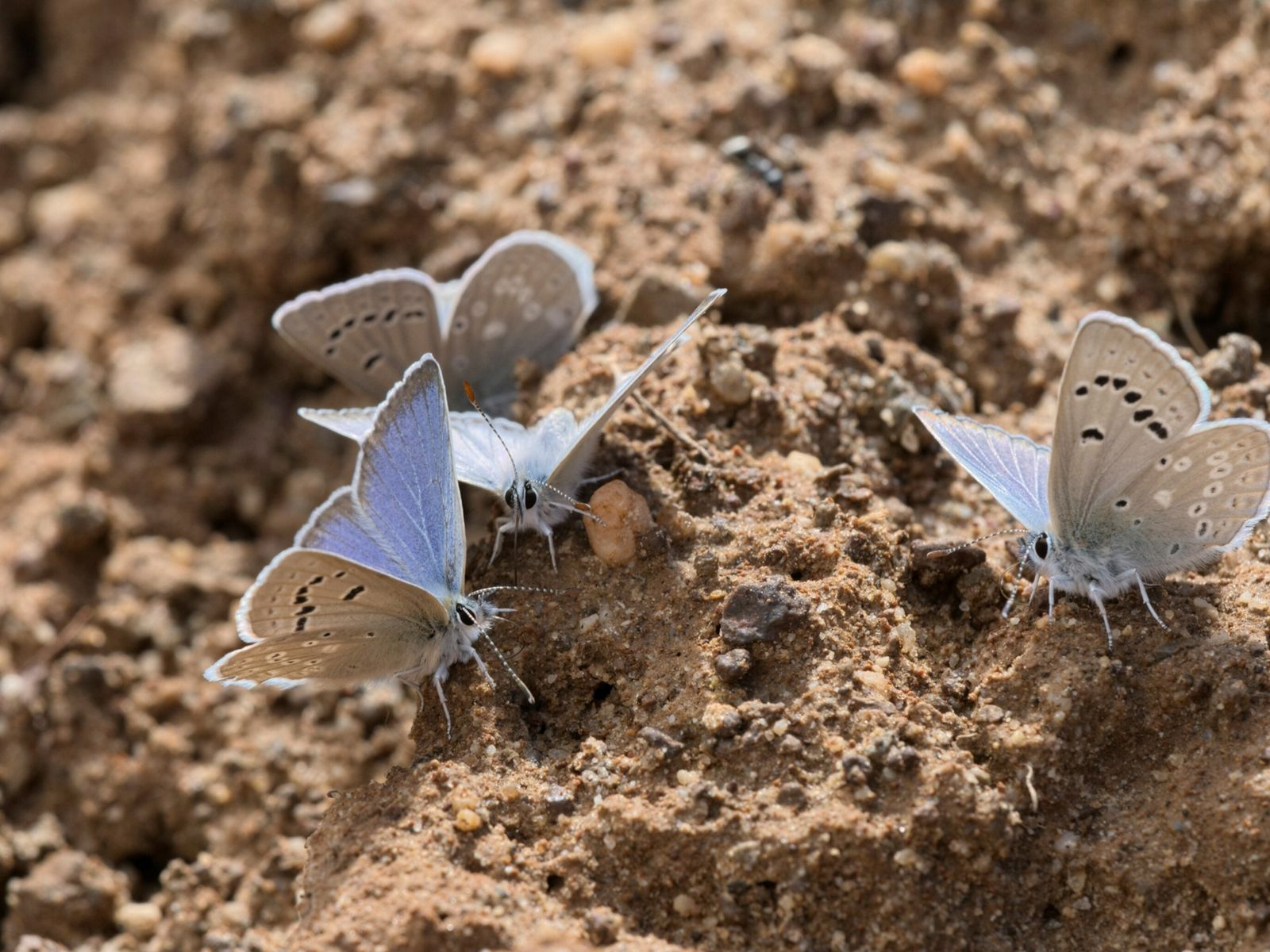450-butterfly-species-decline-02