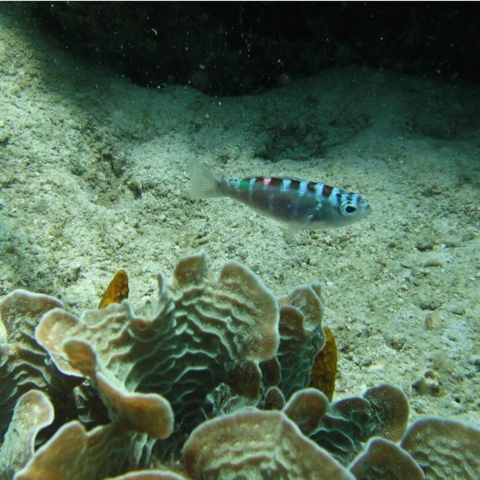 Ces poissons changent de sexe jusqu'à 20 fois par jour