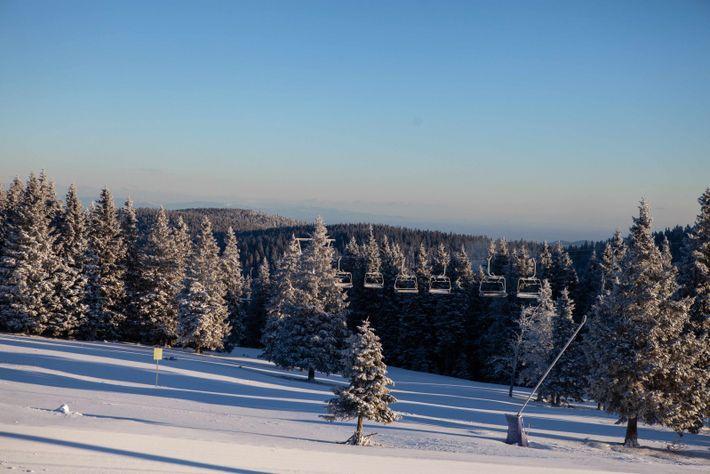 Les premiers rayons du jour révèlent la blancheur immaculée des chutes de neige nocturnes sur la ...