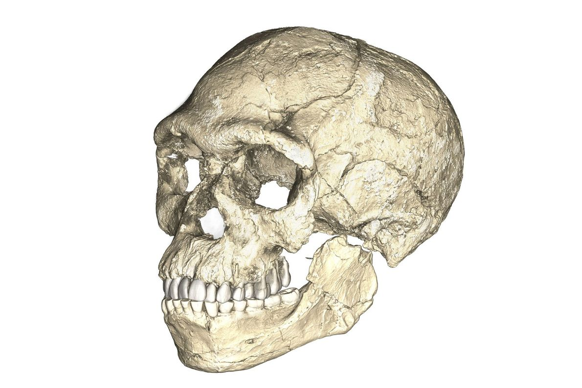 morocco-early-humans-01