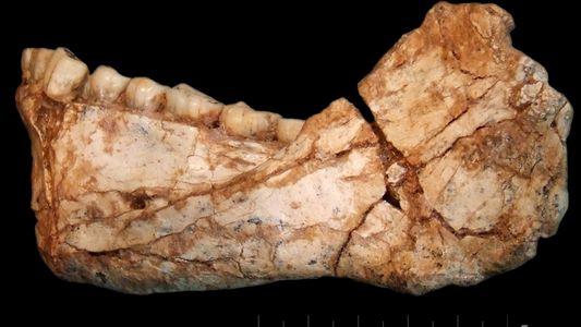Une nouvelle découverte remet en cause l'évolution de l'« Homo sapiens »