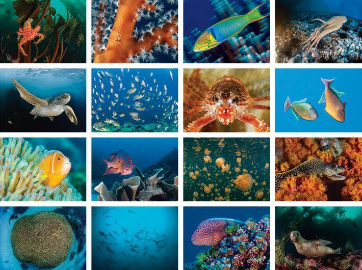 Première rangée : Crabe royal de Patagonie, île des États, Argentine ; gobie sur des coraux mous, ...