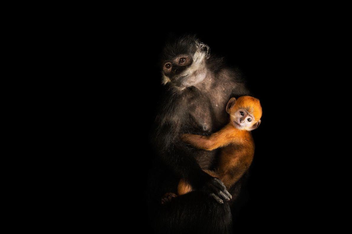 Une affaire de singe