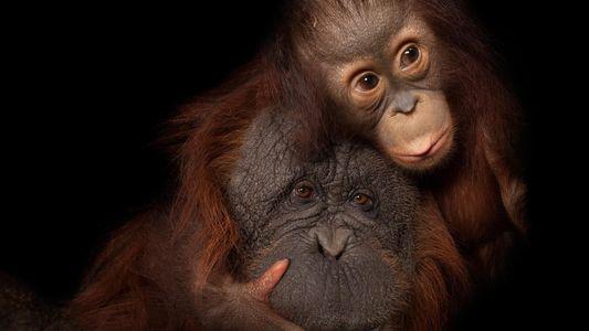 Les animaux célèbrent leurs mamans