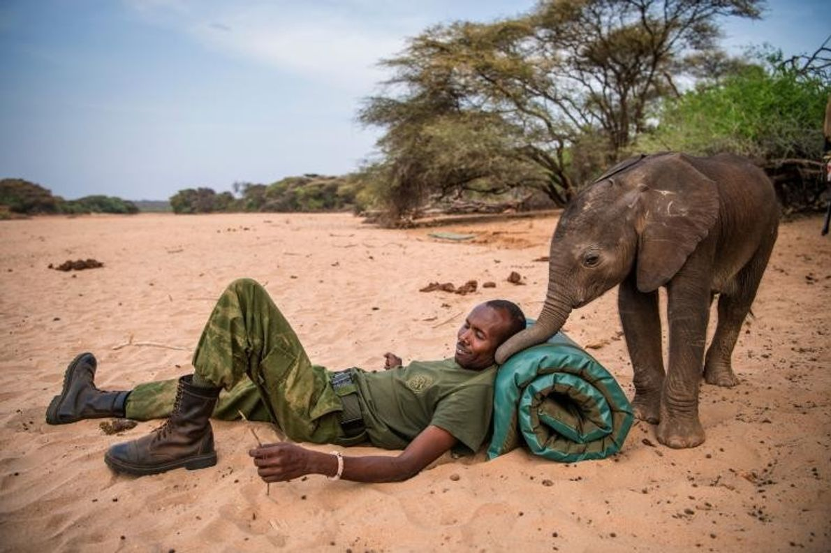 Des guerriers samburus ont découvert cet éléphanteau alors qu'il était pris au piège dans un puits ...