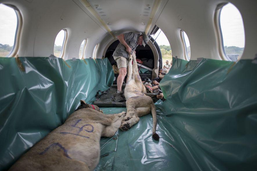 Après plusieurs heures de vol, les deux avions atterrissent sur une piste poussiéreuse au Mozambique.