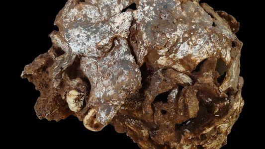 Cette tombe d'enfant est la plus vieille sépulture humaine jamais découverte en Afrique