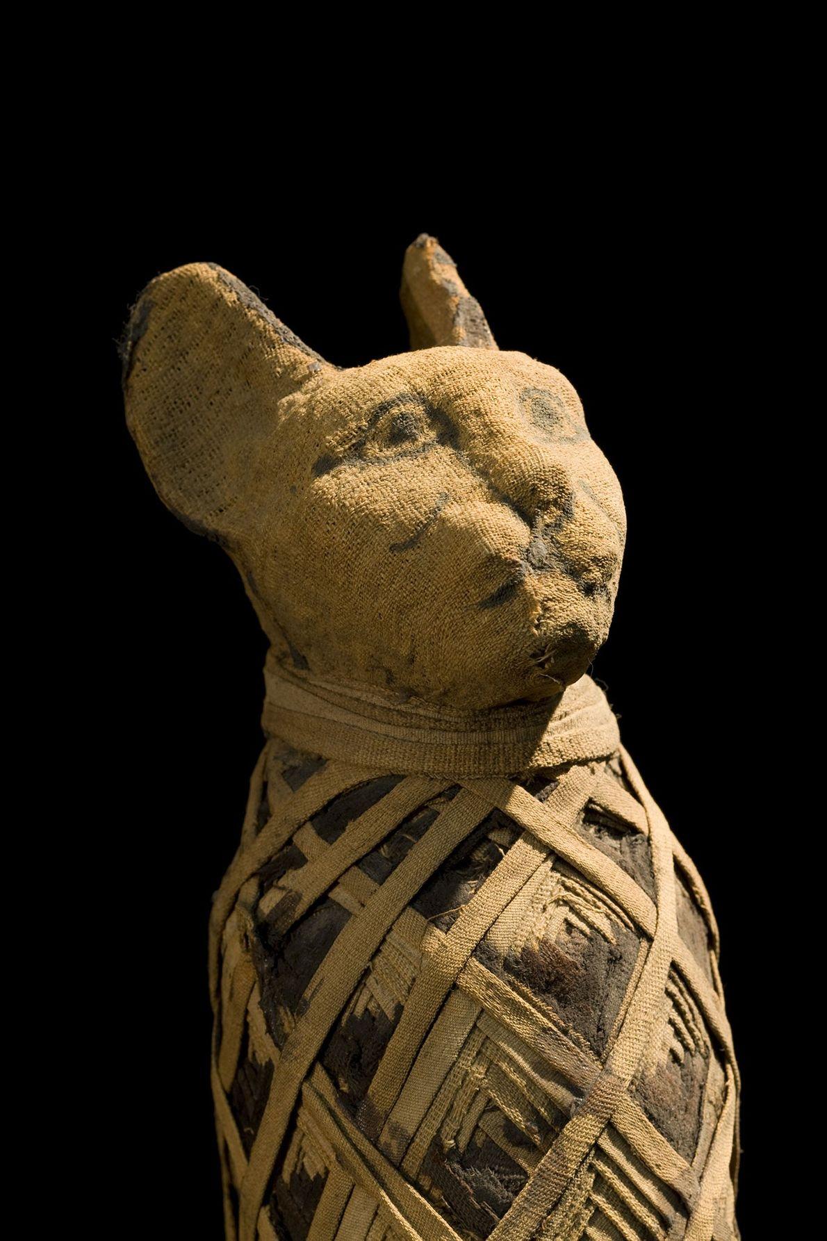 Les bandes de lins repliées peuvent donner l'impression d'un collier de chat, mais l'animal qui repose ...