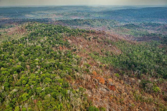 Sur cette photographie on distingue clairement les dégâts causés par les incendies sur le territoire autochtone ...