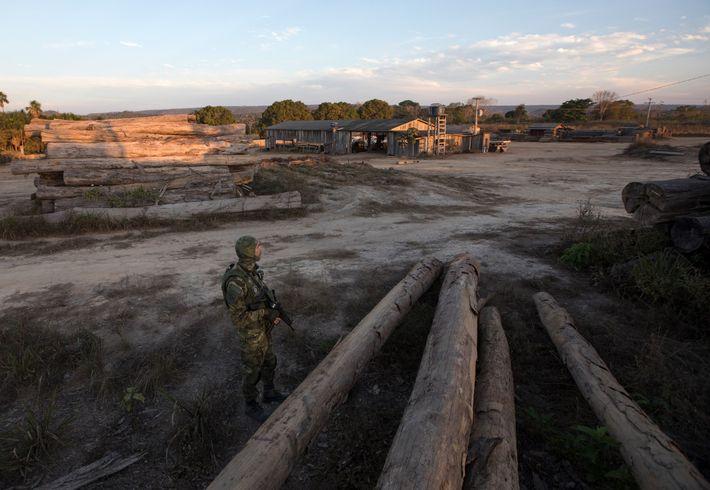 Un agent de l'IBAMA fait le guet dans une scierie de Boa Vista do Pacarana, dans ...