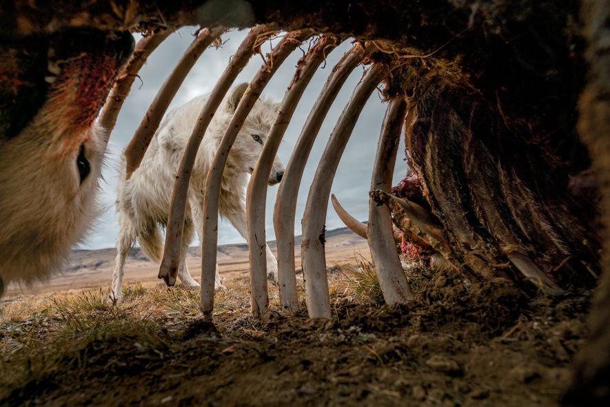 Rétrospective: nos plus beaux clichés d'animaux en 2019