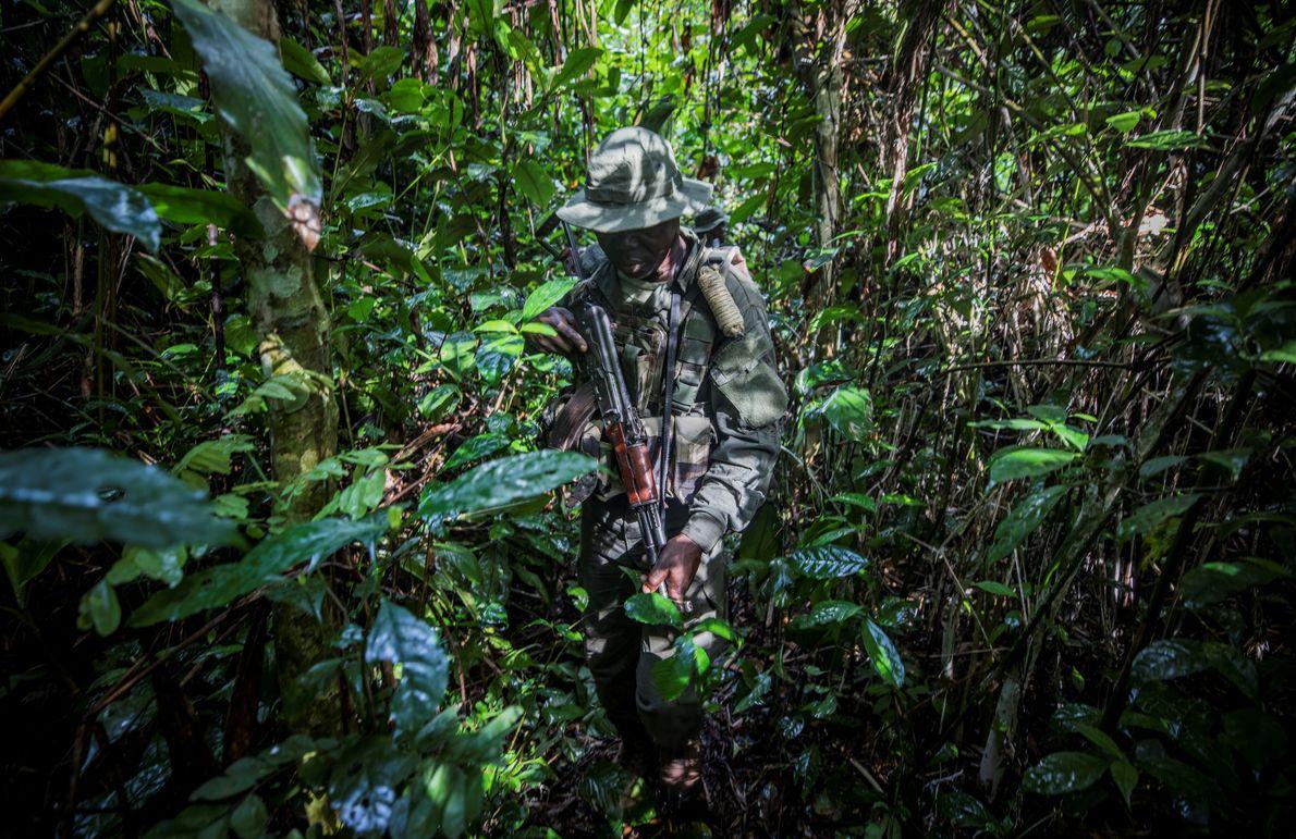 Un éco-garde progresse discrètement à travers l'épaisse végétation dans la réserve spéciale de Dzanga-Sangha en République ...