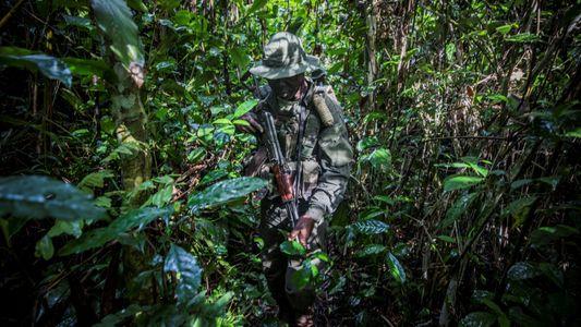 En République centrafricaine, dernier paradis des éléphants de forêt