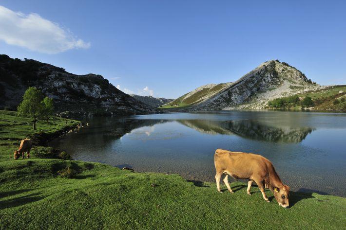 Le parc national Picos de Europa s'étend sur des lacs tranquilles spectaculaires, des grottes calcaires, ainsi ...