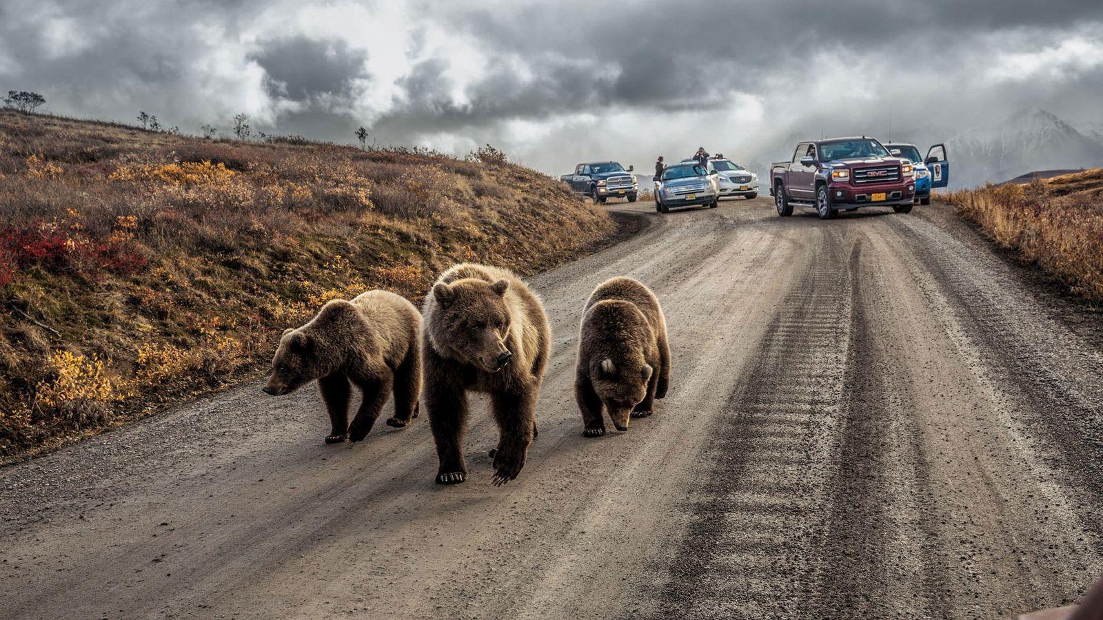 Au mois de juin, le service américain des parcs nationaux annonçait une nouvelle loi qui autorisait ...