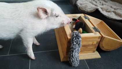 Ce cochon fait sa lessive et range ses jouets