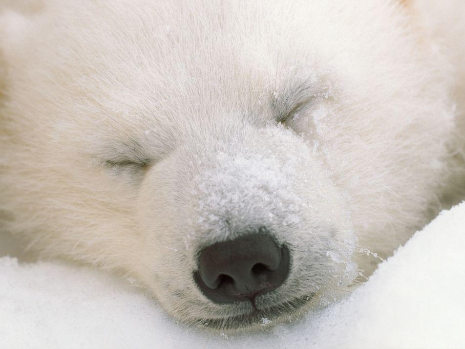 Comment dorment les animaux ?