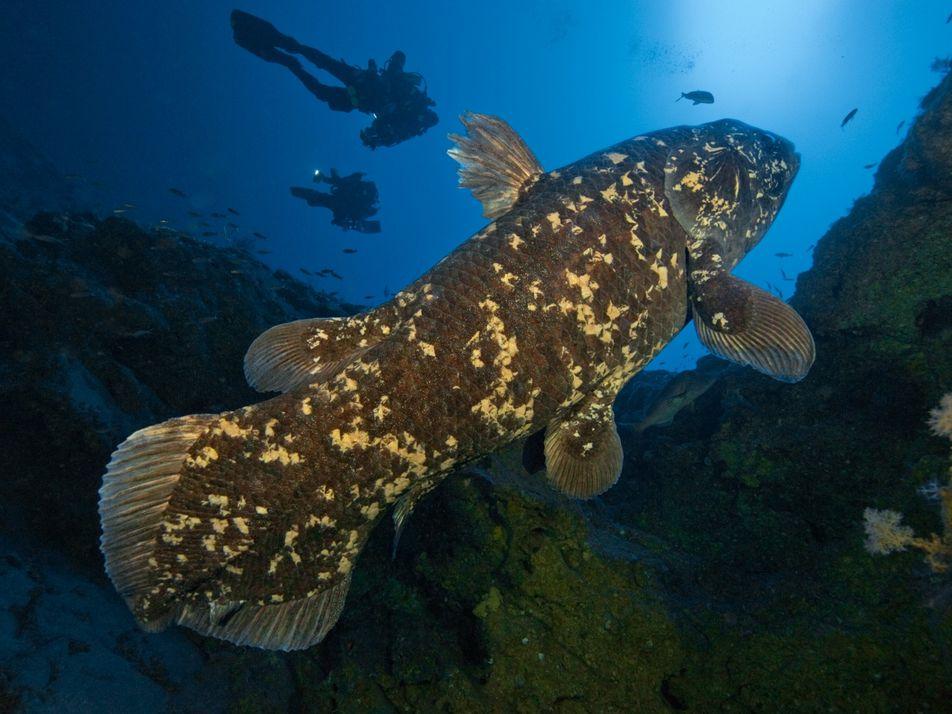 Ce poisson des abysses peut vivre jusqu'à 100 ans