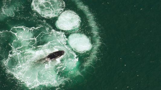 Non, les baleines ne peuvent pas avaler un être humain