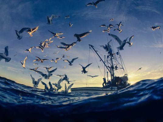 Comment protéger les coraux et les oiseaux marins dans un monde en réchauffement ?