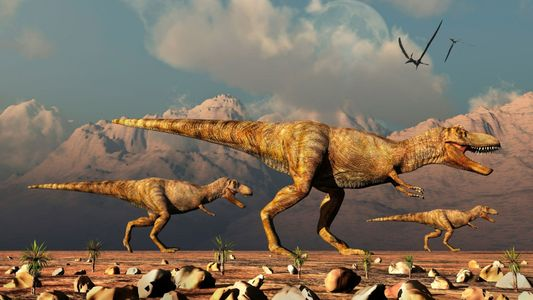 Au moins 2,5 milliards de T. rex auraient vécu sur Terre