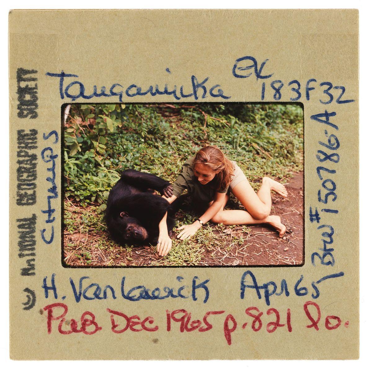 Jane et un chimpanzé jouent ensemble sur le sol.