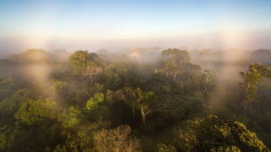 À cause des perturbations liées aux activités anthropiques, la forêt amazonienne émettrait désormais plus de gaz ...