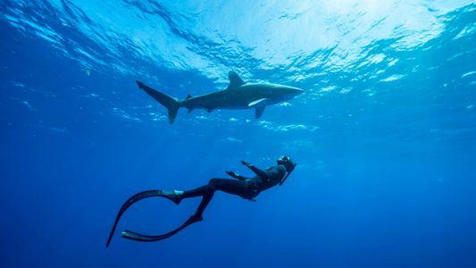 Comment sensibiliser nos enfants à la conservation des requins ?