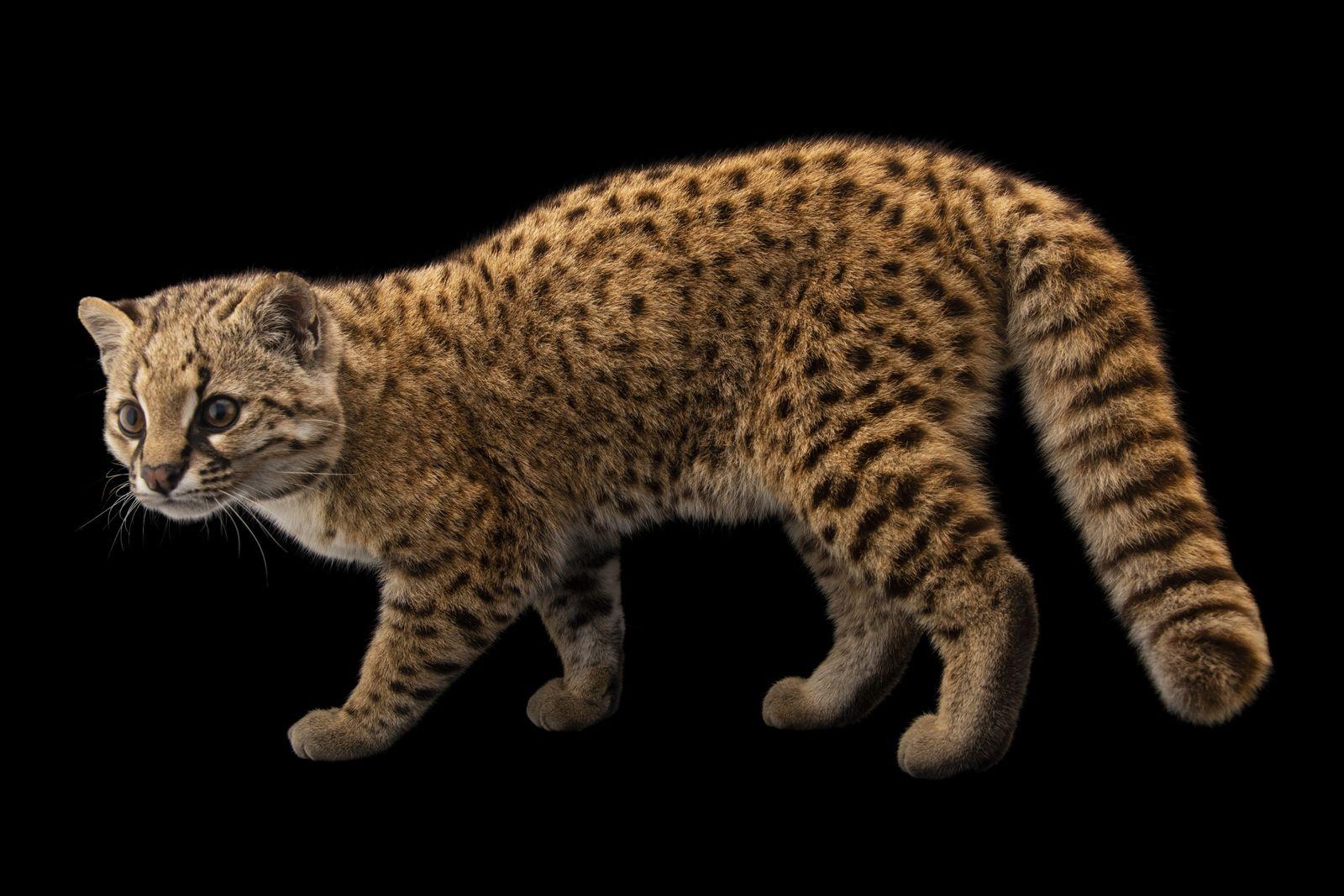 L'arche photographique de National Geographic compte désormais 10 000 espèces