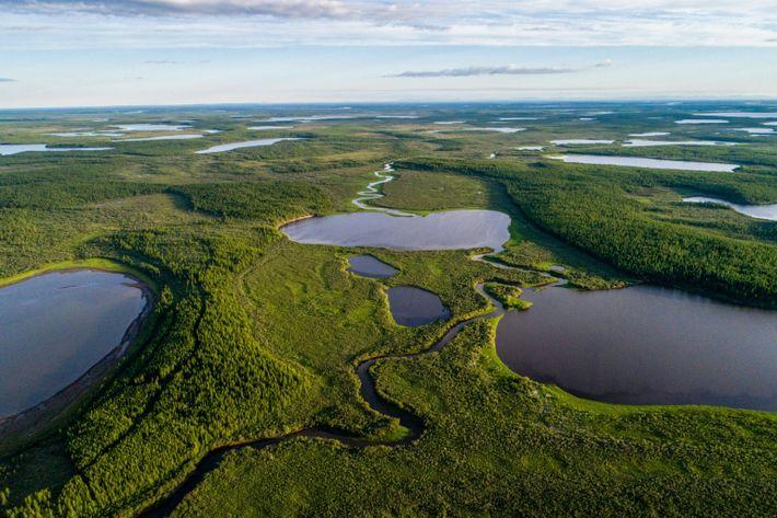 La verdure luxuriante de Pléistocène Park se fraie un chemin entre les lacs bleus du nord ...