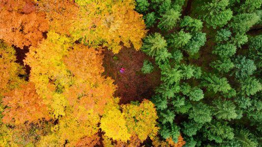Les mille et unes couleurs de l'automne