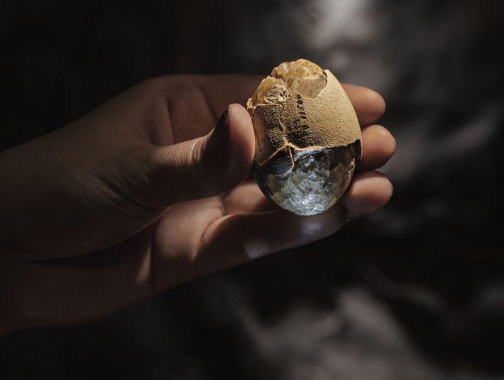 Pondu des dizaines de millions d'années après l'extinction des dinosaures non aviaires, cet œuf d'oiseau fossilisé ...