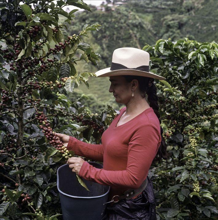 Un avenir meilleur pour les caféiculteurs