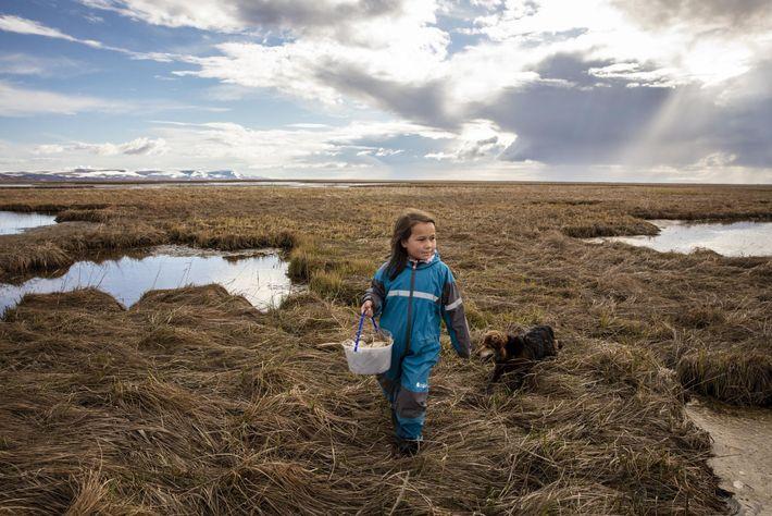 La petite Kaliegh Charles récupère des œufs d'oie avec sa famille sur les rives du Ninglick. ...