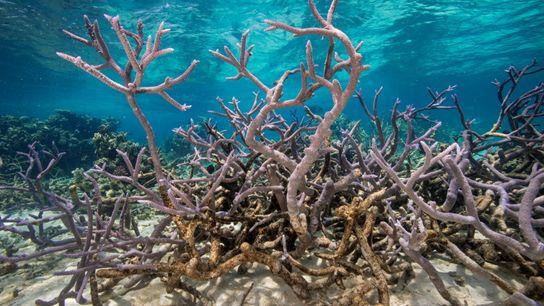 editor-page-05.2021-corals