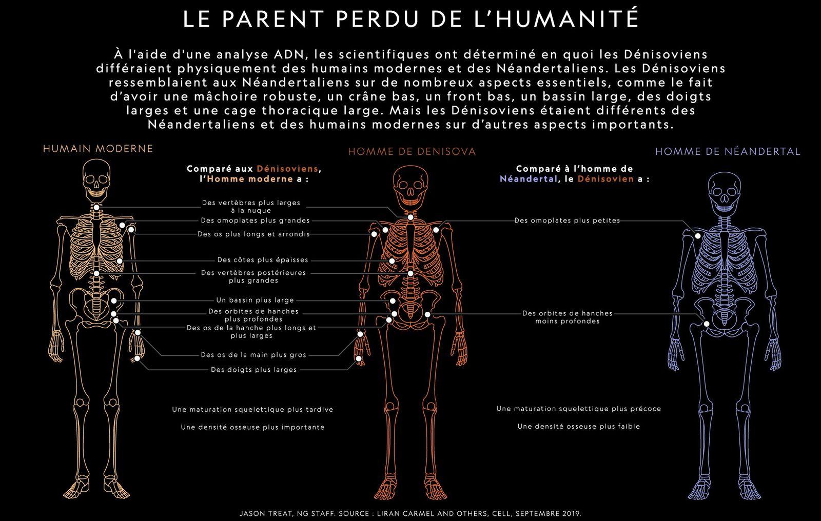 L'Homme de Denisova comparé à l'Homme de Neandertal et à l'Homme moderne.