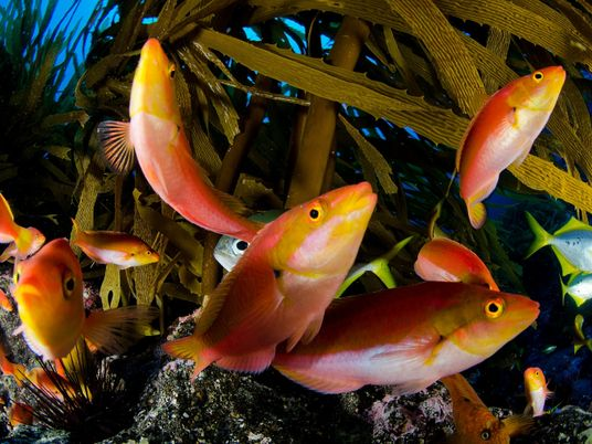 Pourquoi il est crucial de protéger les océans et leur extraordinaire biodiversité