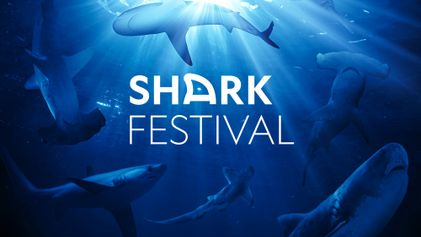 Shark Festival | Bande annonce