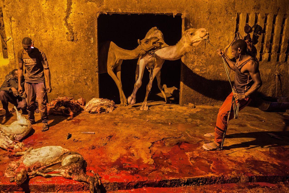 Les acheteurs choisissent leurs bêtes au marché de bétail avant de les envoyer dans cet abattoir ...