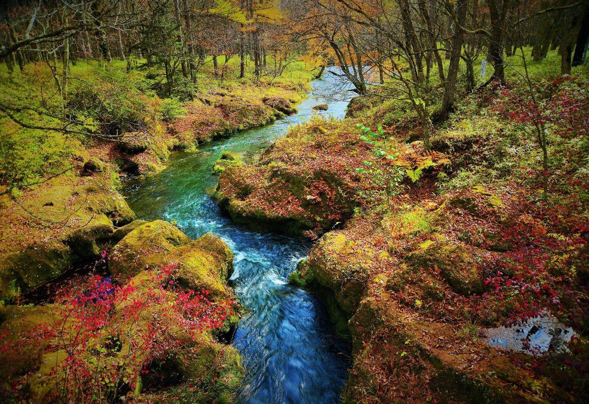 Le vert de la mousse et le pourpre des feuilles mortes se mélangent en bordure de ...