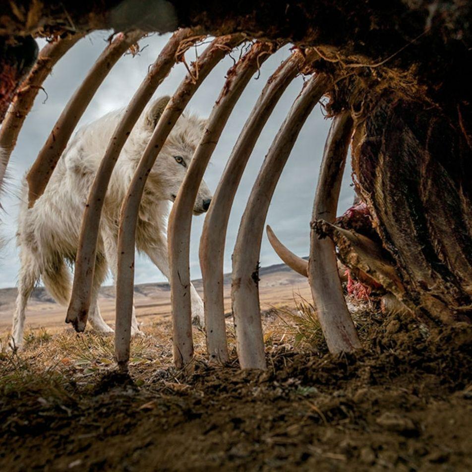 Photographie: ces gadgets ont rendu possibles les clichés spectaculaires de National Geographic