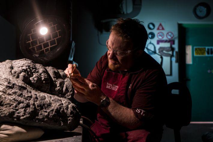 Technicien au Musée Royal Tyrell de paléontologie d'Alberta, Mark Mitchell a minutieusement et lentement libéré le ...