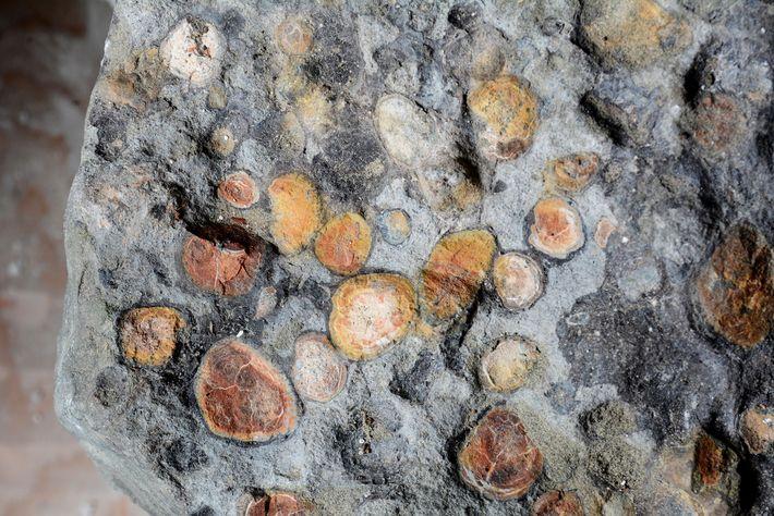 Des pierres ont été retrouvées dans l'estomac du Borealopelta, sans doute avalées par le nodosaure pour ...
