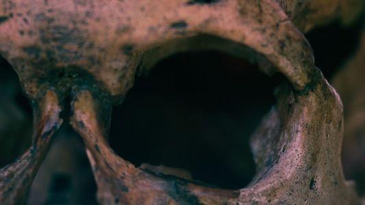 Scythes : ces squelettes racontent le violent déclin d'un empire