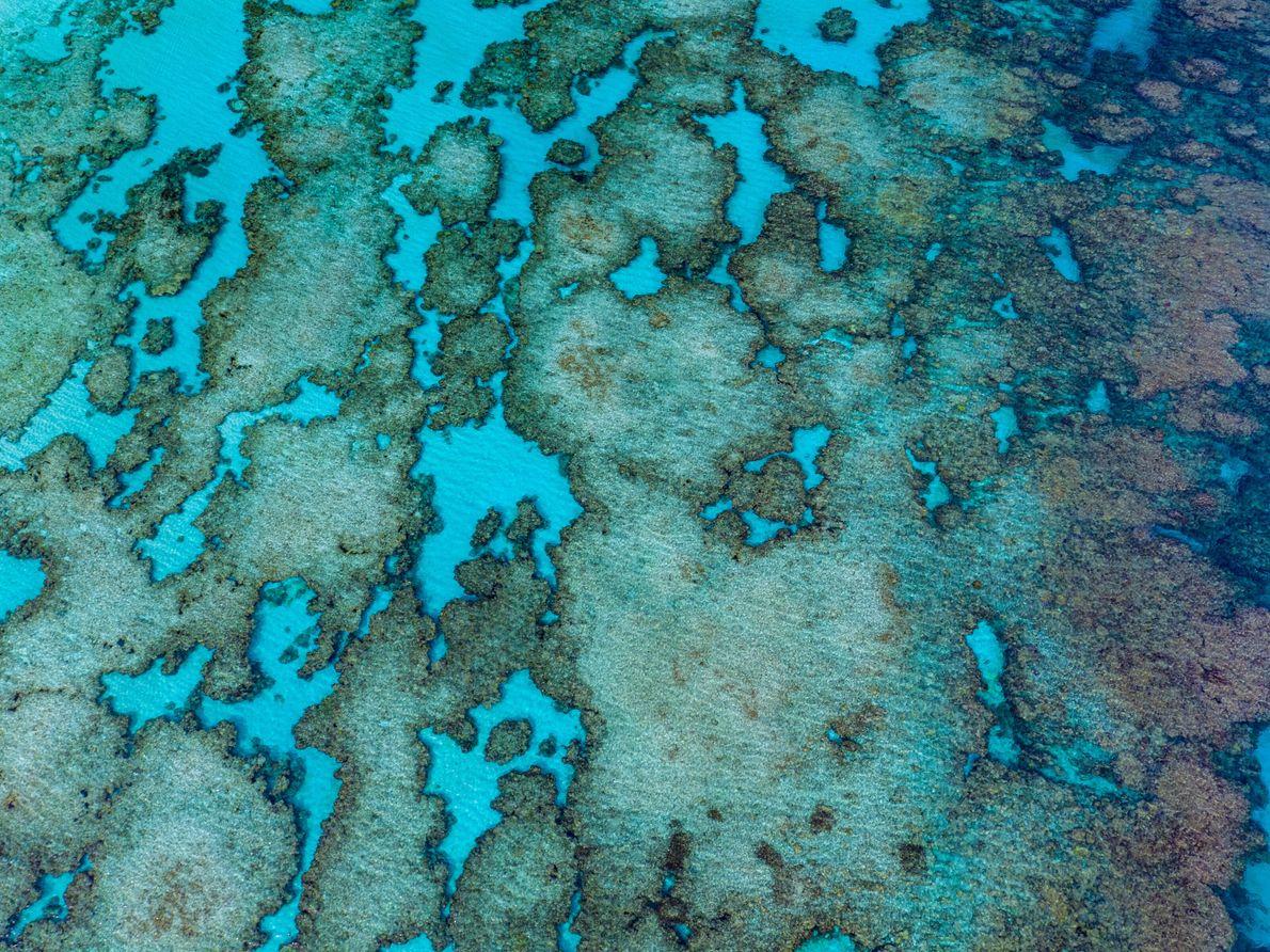 La Nouvelle-Calédonie, France. L'île de Lifou va accueillir un programme de régénération du corail.