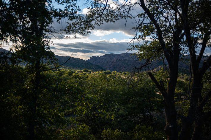 Sacré aux yeux des Apaches, Oak Flat abrite également tous les éléments nécessaires à la vie : de ...