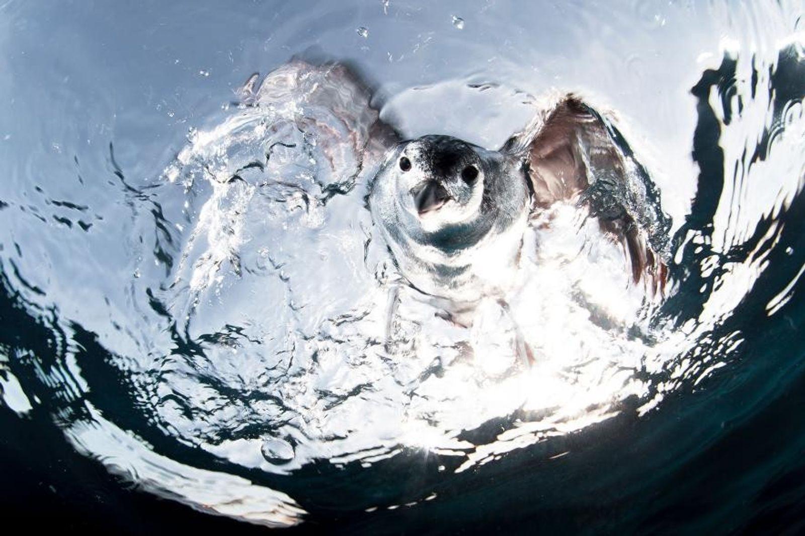 La vie aquatique vue par National Geographic