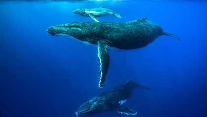 Objectifs d'Aichi : aucun engagement pour sauver la biodiversité n'a été respecté