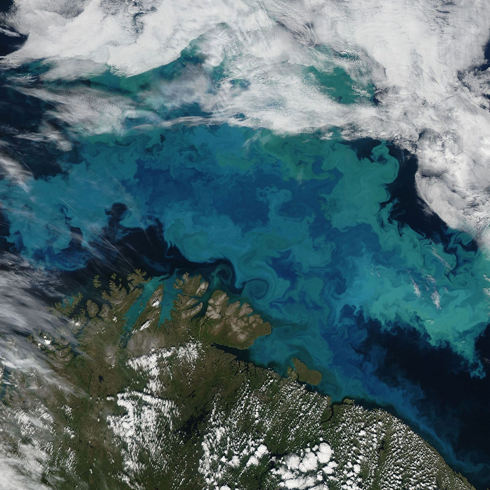 Une prolifération de phytoplancton dans la mer de Barents le 14 août 2011. Le cliché a ...