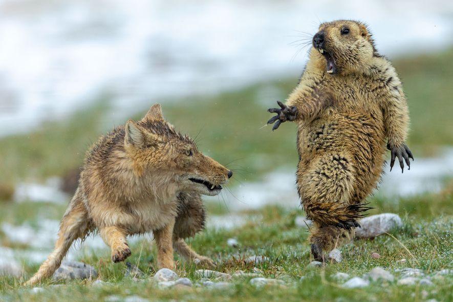Et les meilleurs photographes animaliers de 2019 sont...